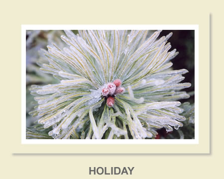 Click to view Holiday Greeting Cards