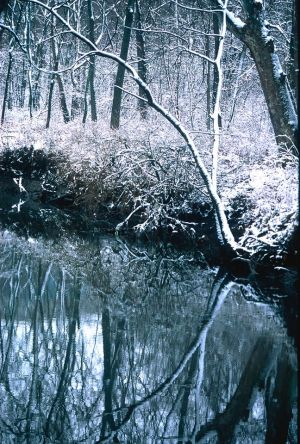 Winter Reflection I