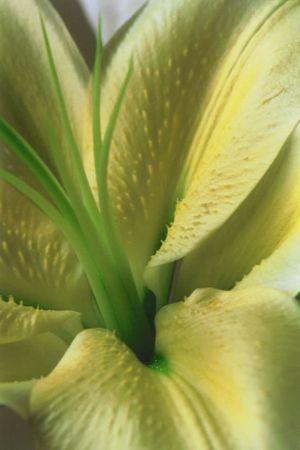 Bob's Lily