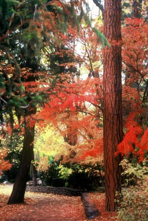 Autumn in the Park I