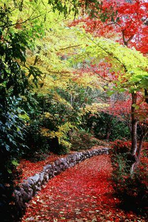 Autumn in the Park II