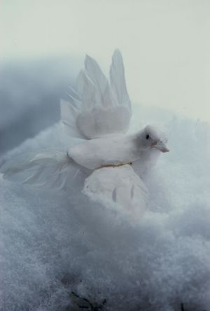 Dove & Snow II