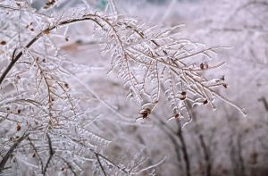 Ice Branches II