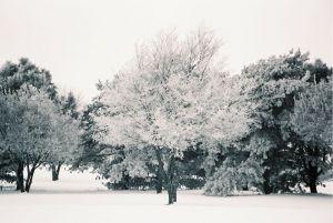 Ice Trees I