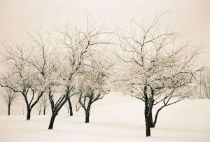 Ice Trees III