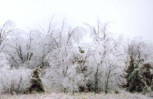 Ice Trees V