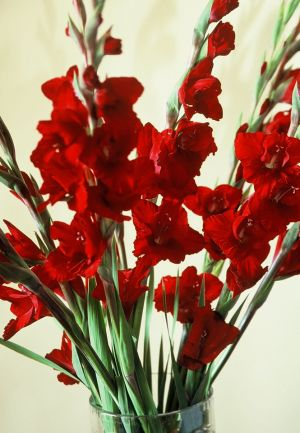 Red Gladiolas II