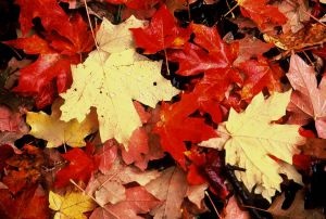 Fall Leaf Mosaic