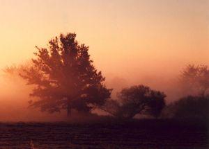 Autumn Landscape I